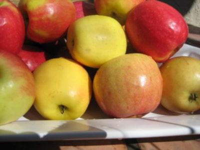 Apples014